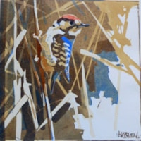 Lesser Spotted Woodpecker by Andrew Haslen
