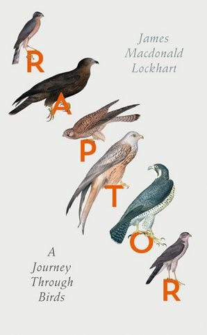 Raptor - a Journey Through Birds