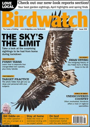 Birdwatch June Cover