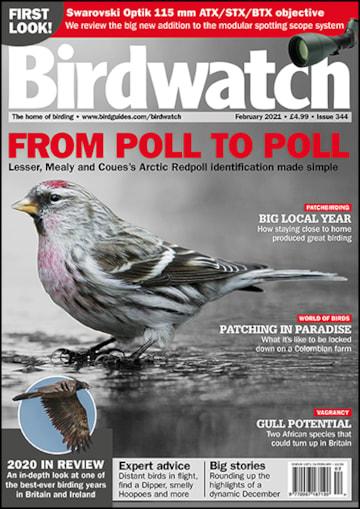 Birdwatch - February 2021