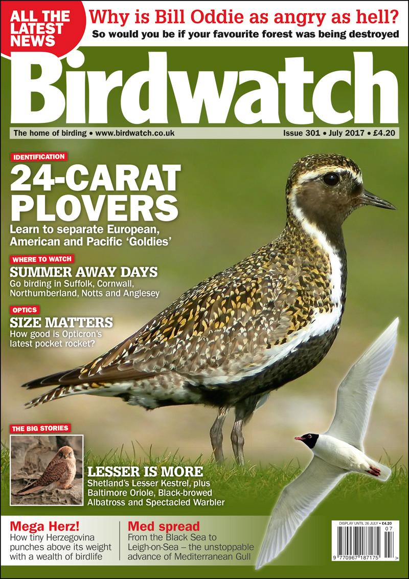 Birdwatch July 2017 Issue