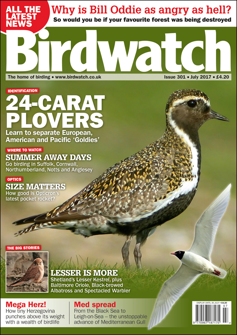 Birdwatch July 2017 Issue