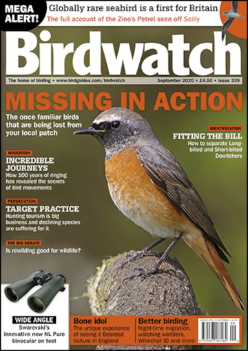 Birdwatch September 2020