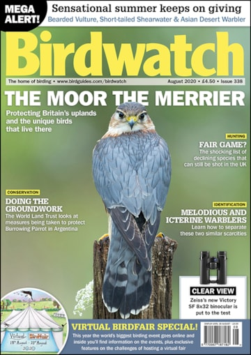 Birdwatch August Cover