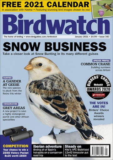 Birdwatch January 2021