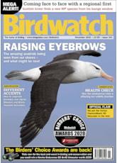 Birdwatch November 2020 issue