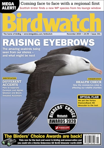 Birdwatch November 2020 issue