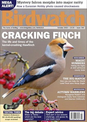 Birdwatch October 2020
