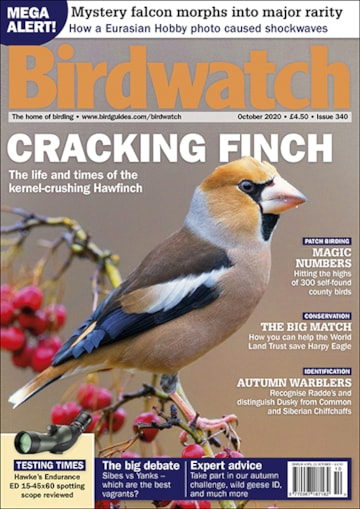 Birdwatch October 2020