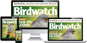Birdwatch Magazine