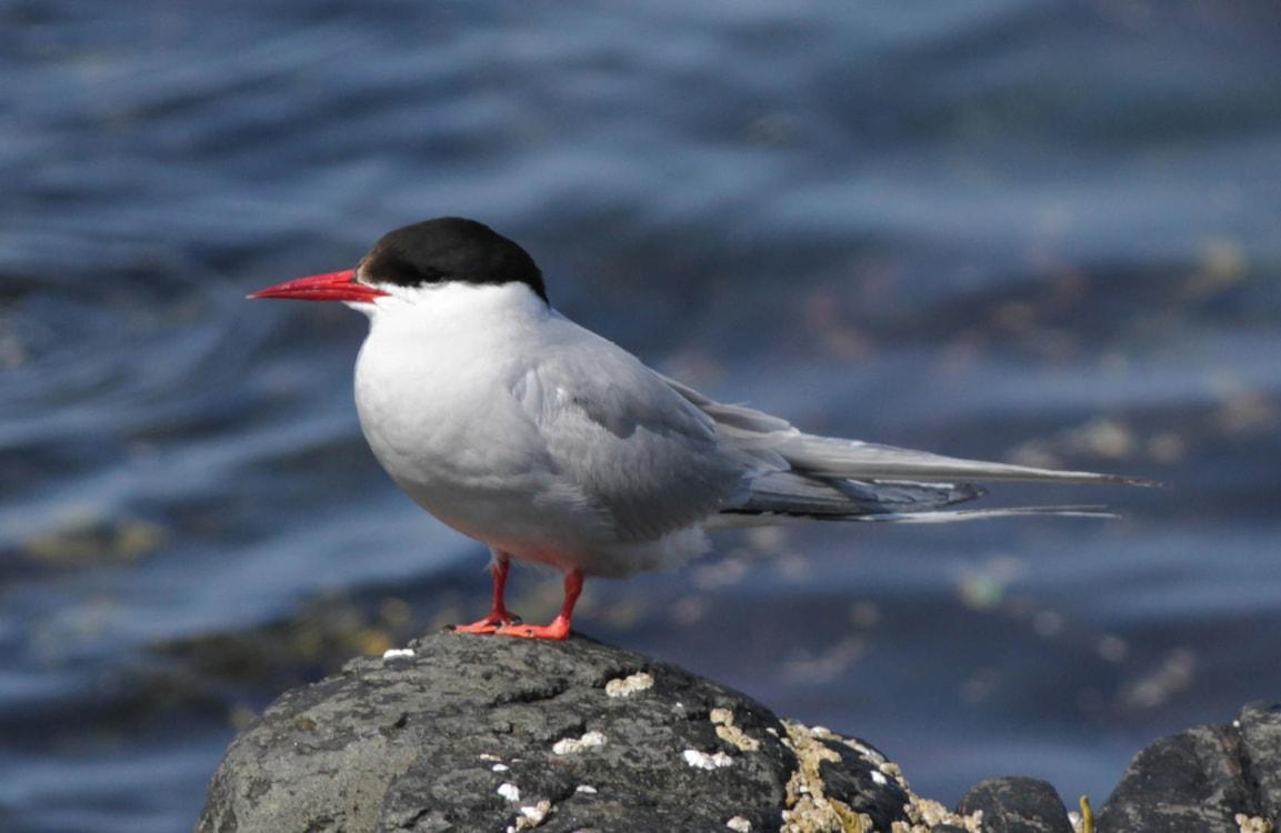 птахи арктики фото номерах