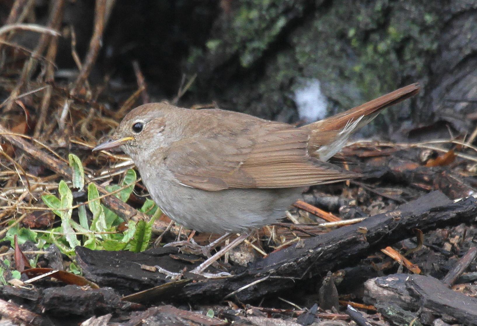 выращивании птицы курской области фото и название его