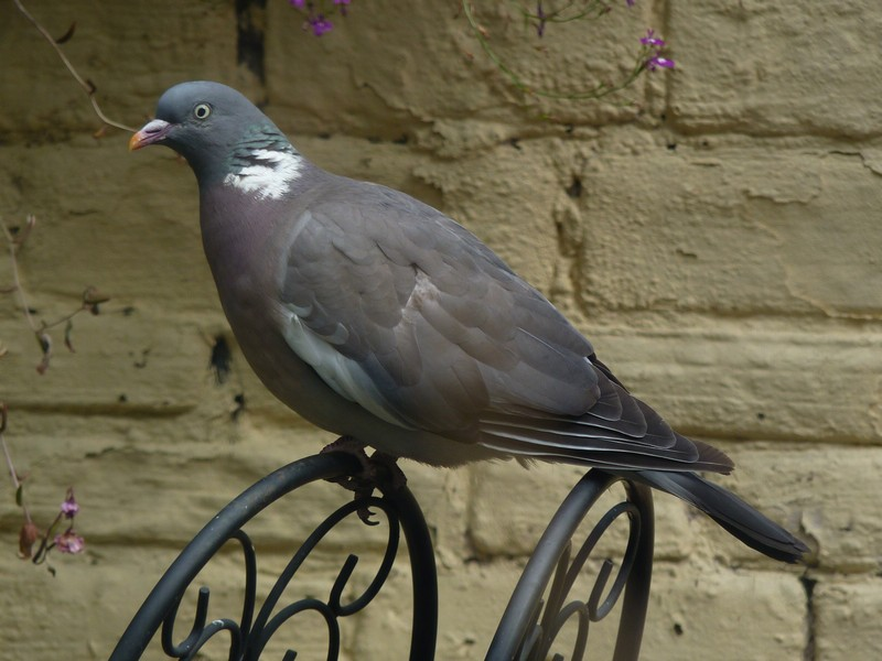 How To Keep Wood Pigeons Out Of Your Garden Designs