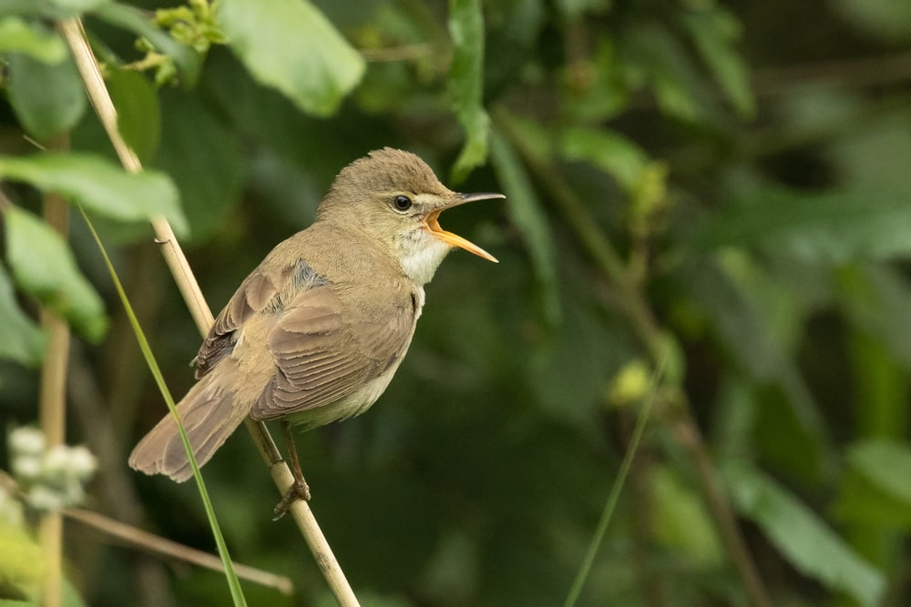 Photo Of The Week 3 9 June 2020 Birdguides