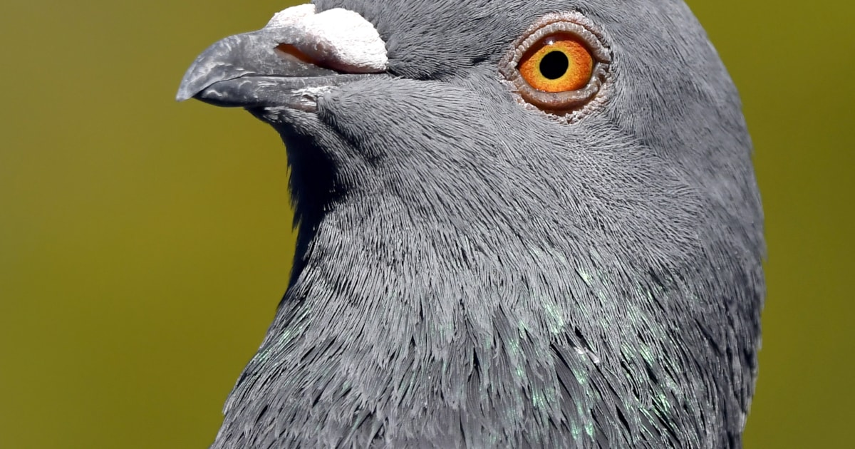 Anti-bird netting rally planned in Louth