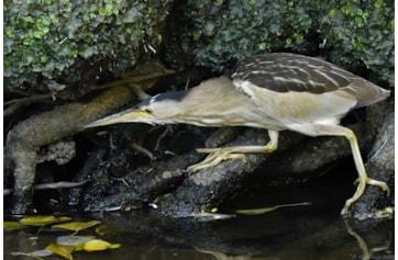 Budle Bay Birdwatching Site - BirdGuides