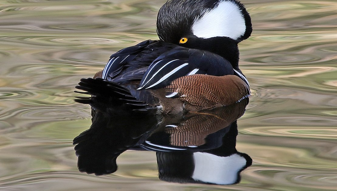 Two thirds of North American birds 'could go extinct'
