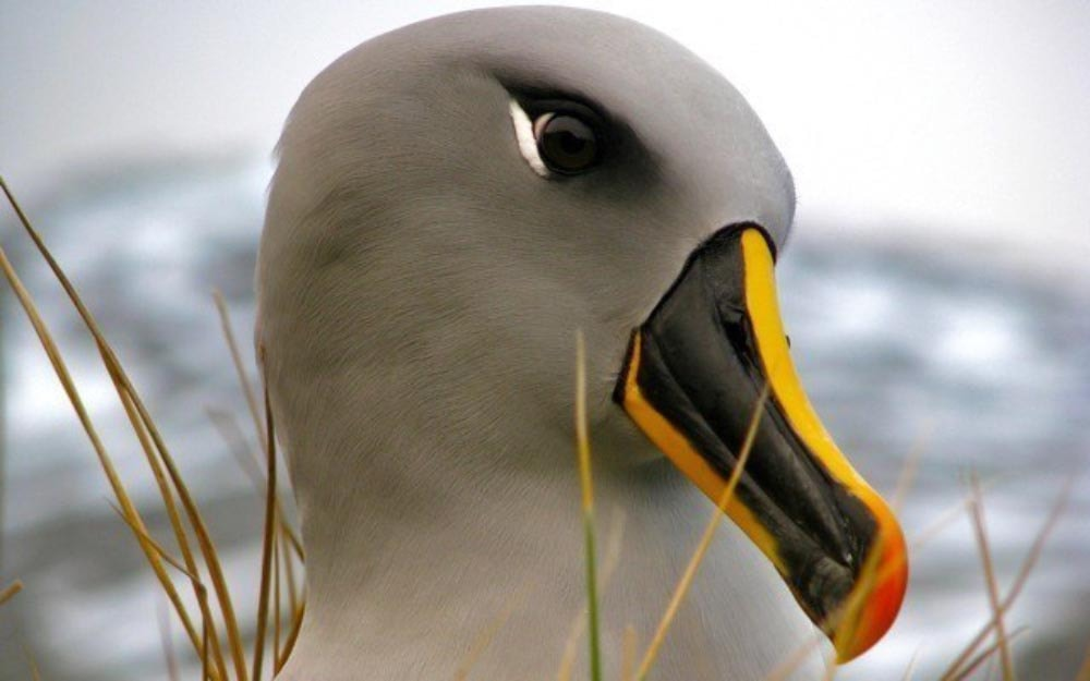 Chile moves to protect seabirds