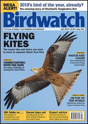 Birdwatch April 2019
