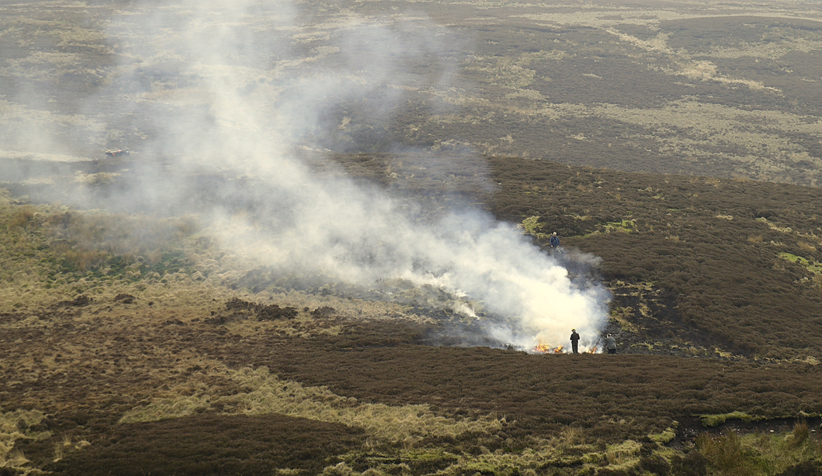Burning old-growth heather on the UK's uplands blanket bogs damages peat soil, a unique and biodiverse habitat (Gary Rogers via Wikimedia Commons).
