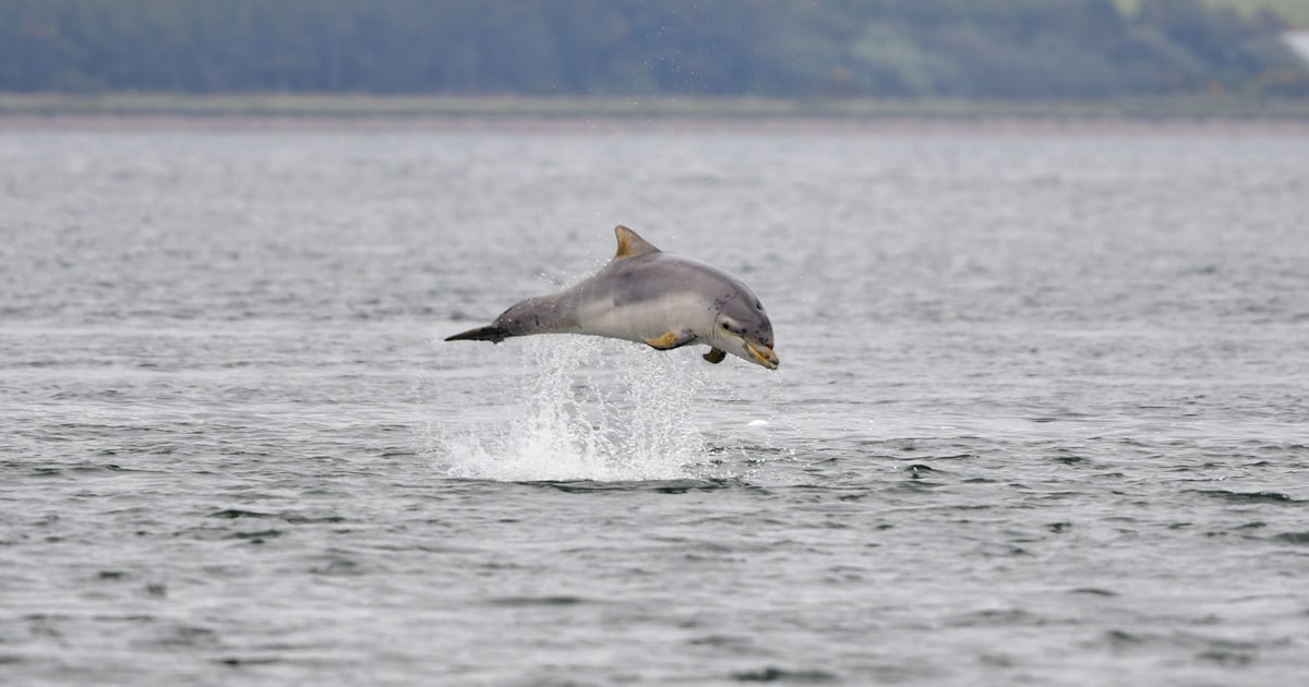 'Cocktail of pollutants' found in dolphins in English Channel