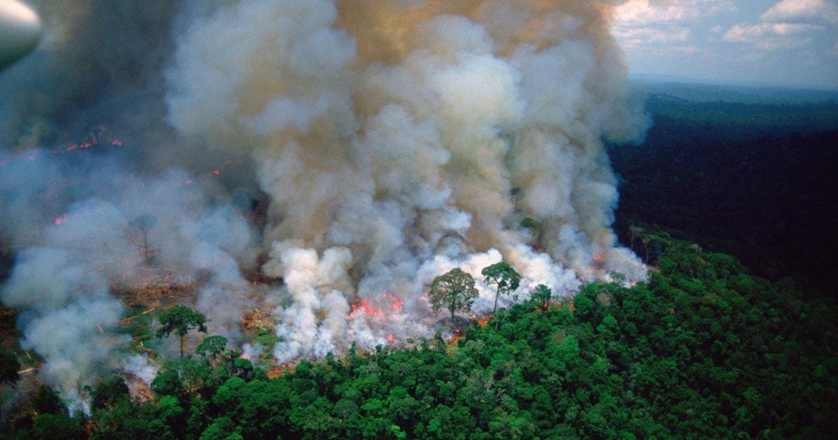 Brazilian Amazon burning at an unprecedented rate