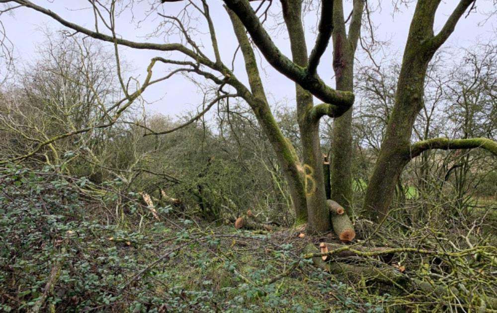 HS2 destroys habitat on Berkshire reserve without permission