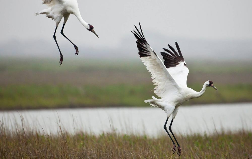 Extinction risks mapped worldwide