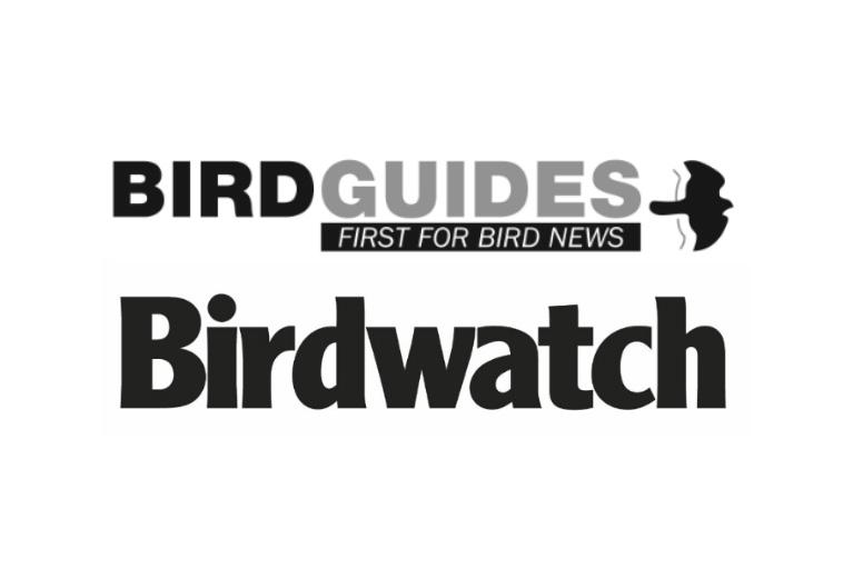 BirdGuides and Birdwatch