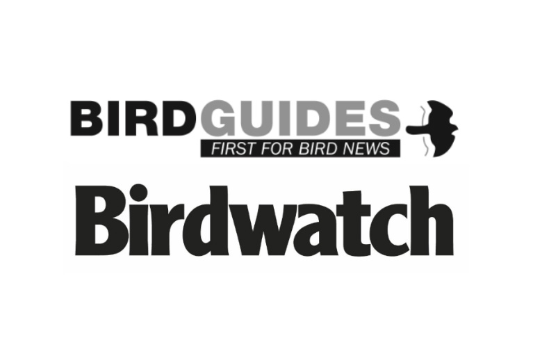 BirdGuides and Birdwatch