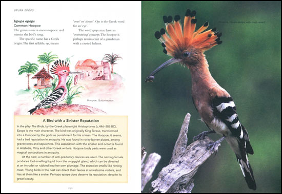 Page from Birds: What's in a name? by Peter Barry