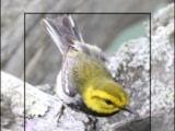 Merlin Bird ID app screen shot 3