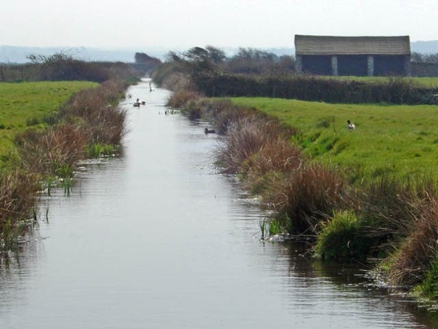 Typical view across Braunton Marsh, which is criss-crossed by drainage dykes and dotted with cattle linhays (shelters). It is made up of numerous separate marshes and grazed by individual owners' livestock and managed overall by The Braunton Marsh Co