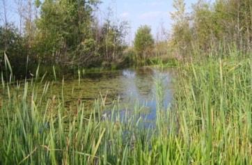 Ponds 2.