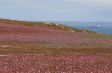 Red campion and bluebells carpet great swathes of the island