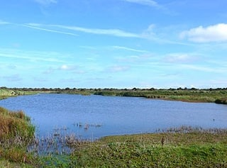View from Mere Hide.