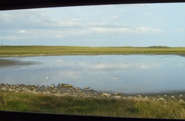 The view of Gretchen Loch from the bird hide. Gretchen Loch is just a short stroll from the North Ronaldsay Bird Observatory and guesthouse. It can be a superb site for waders, regularly attracting scarce and rare species, particularly when the water