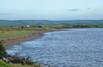 This image shows the sand and shingle, foreshore roost; well used by waders when forced off the Skern mudflats.