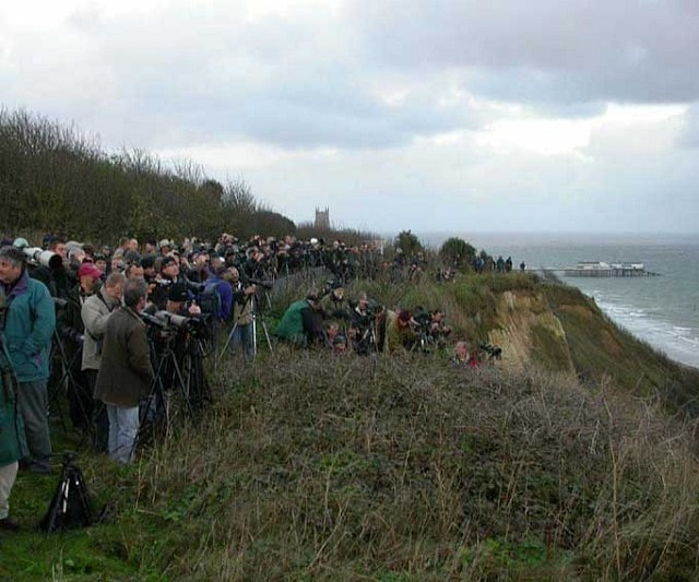 Part of the crowd that gathered to watch the Little Swift leave its roost.