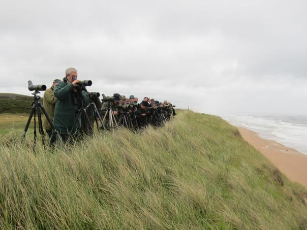 The first morning of the American White-winged Scoter twitch.
