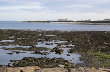 View south from Beacon Point to Church Point at low tide.
