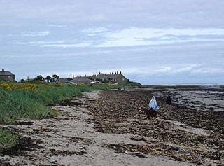 Waders feed on area of seaweed on the beach