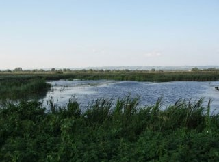 View north over reedbeds