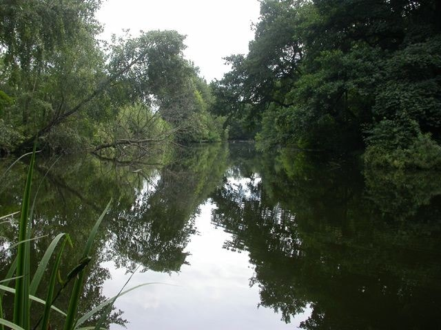 The Curling Pond on Ryton Willows (NZ154649).