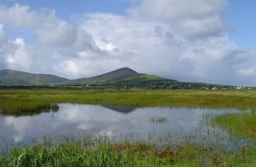 The pool at Baile an Reannaigh, Smerwick Harbour. Once a wader Mecca, but sadly now rather overgrown.