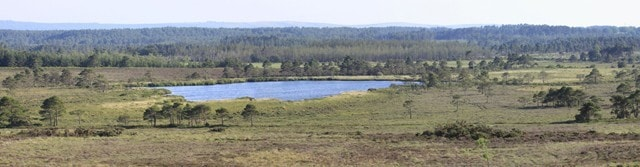 The old decoy pond with Wareham forest and the Purbeck hills in the background.