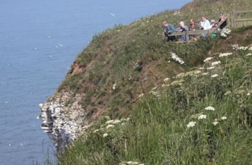 The most northerly viewing platform at Bempton Cliffs RSPB is Jubilee Corner and it can be seen to the right in this photo.