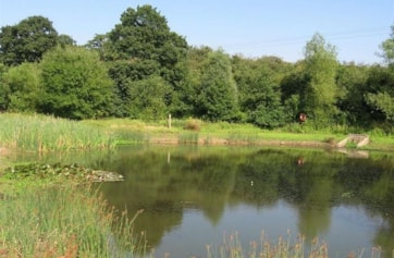 The pond at Maldon Wick, just across the road from Morrisons.