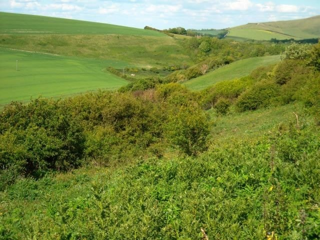 The hawthorn scrub on the steep sides of the beacon is excellent for Green Hairstreaks.