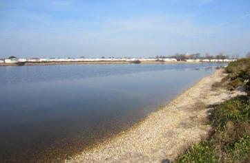 Pagham Lagoon.